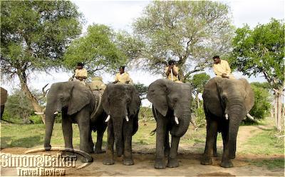 Elephants at Camp Jabulani