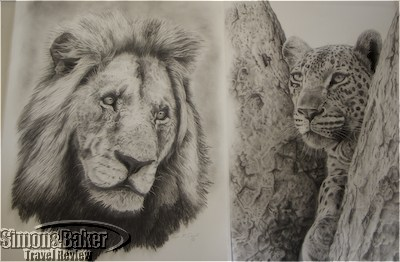 Lion and leopard sketches