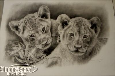 Andre McDonald sketch of lion cubs