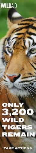 Wild Aid Tigers