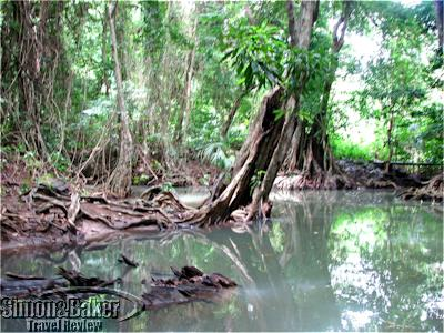 A river through the jungle