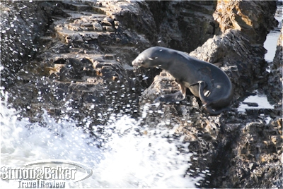 Seals were visible climbing onto the rocky islands
