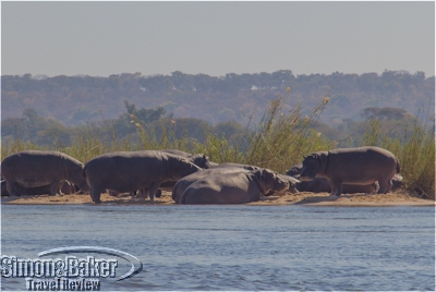 Hippos sunbathing during my canoe trip
