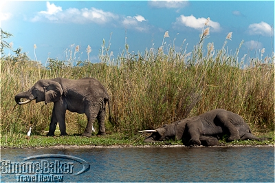 Elephants played and relaxed on the banks of river