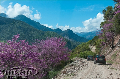 The mountain roads were lined with Judas trees in full bloom