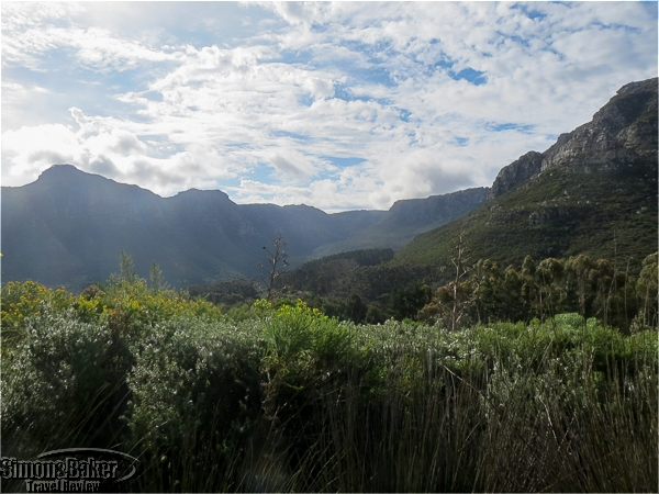 The views of Table Mountain National Park at Silvermist